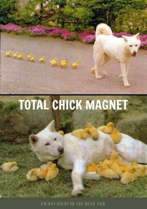Total chick magnet...