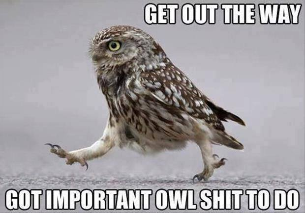 Get out of the way... got important Owl sh*t to do