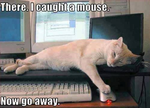 There... I caught a mouse now go away