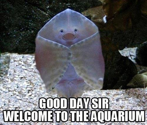 Good day sir... Welcome to the aquarium