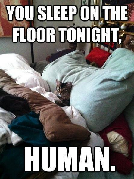 You sleep on the floor tonight human