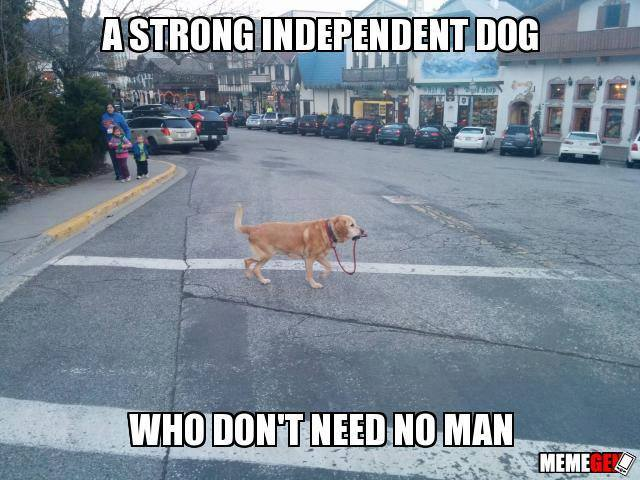 A strong independent dog...