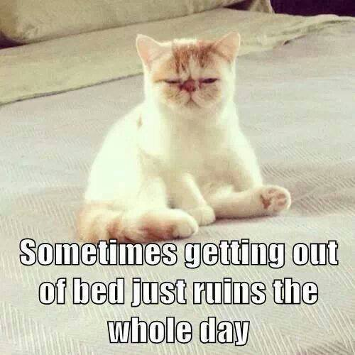 Sometimes getting out of bed just ruins the whole day...