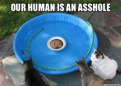 Our human is an a$$-hole...