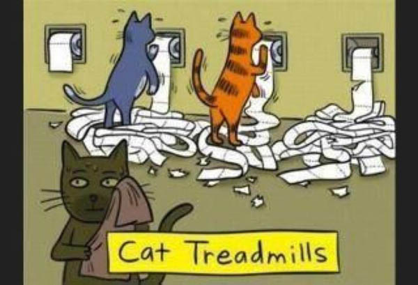 Cat treadmills.  They need a fitness centre too!